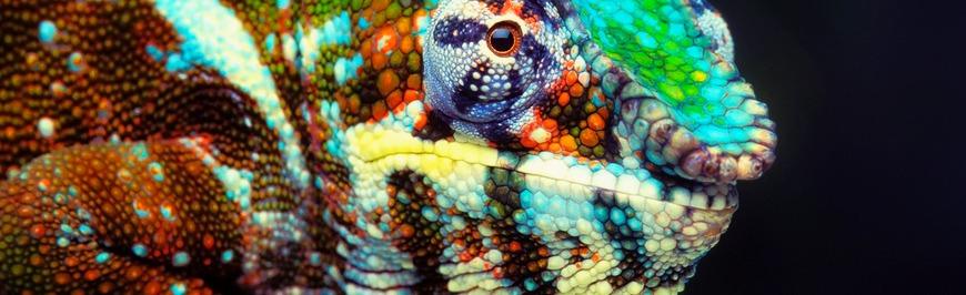 offset_140568-chameleon-color-bluish-short